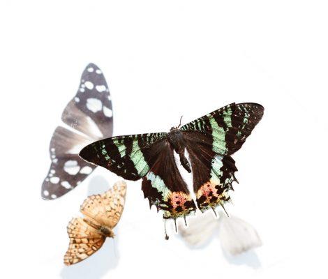 cropped-transfomrat-papallona.jpg